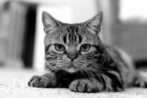 pet-cat-photography.jpg